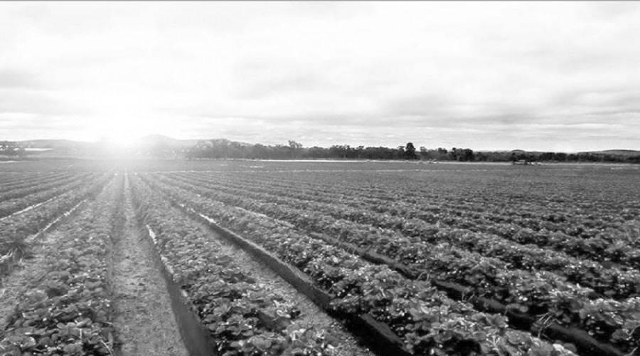 توفير مياه رى بثلاث طرق للمعالجة .. وطفرة فى المحاصيل الزراعية