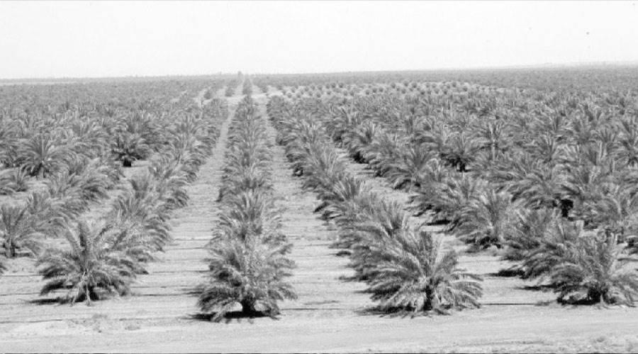 دعم قوى للإنتاج المحلى من المحاصيل و %15 إضافة للرقعة الزراعية