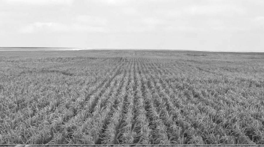 أساليب زراعة حديثة اعتمادا على آخر ماوصلت إليه التكنولوجيا